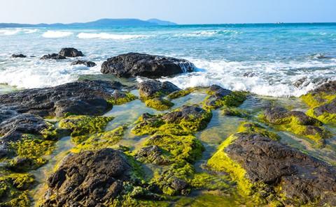 Bãi rêu cổ tích hút du khách khám phá trầm tích núi lửa Quảng Ngãi - Ảnh 5.