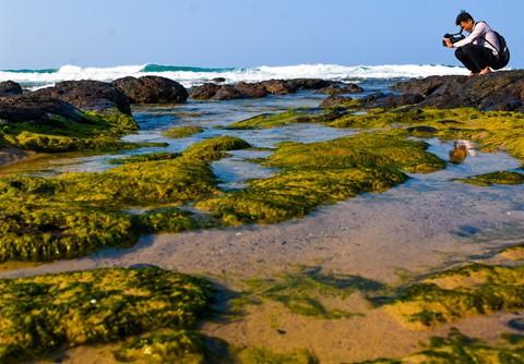Bãi rêu cổ tích hút du khách khám phá trầm tích núi lửa Quảng Ngãi - Ảnh 6.