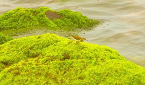 Bãi rêu cổ tích hút du khách khám phá trầm tích núi lửa Quảng Ngãi - Ảnh 10.