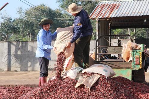 Nâng cao giá trị cà phê Việt - Ảnh 1.