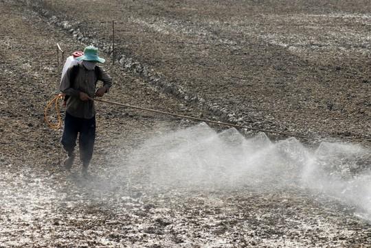 Loại bỏ thuốc diệt cỏ Glyphosate độc hại khỏi Việt Nam - Ảnh 1.