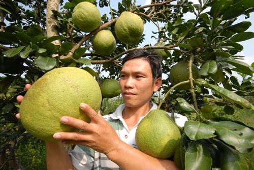 Vực dậy hợp tác xã nông nghiệp