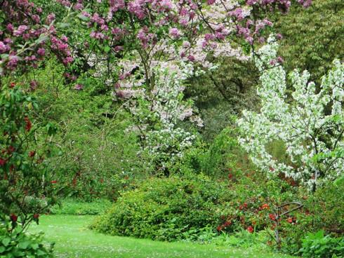 Chiêm ngưỡng vẻ đẹp hoa mùa xuân ở Bỉ - Ảnh 2.