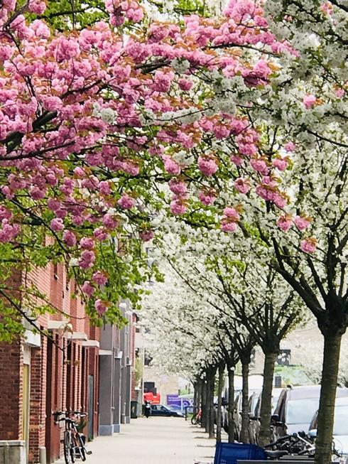 Chiêm ngưỡng vẻ đẹp hoa mùa xuân ở Bỉ - Ảnh 11.