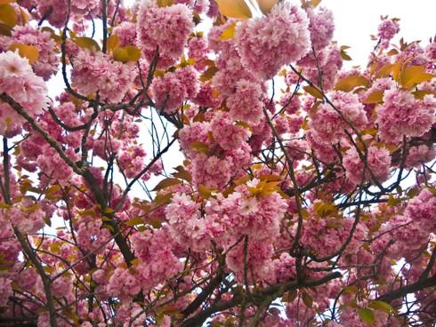 Chiêm ngưỡng vẻ đẹp hoa mùa xuân ở Bỉ - Ảnh 14.