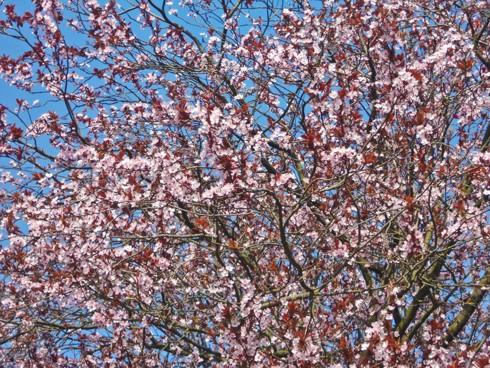 Chiêm ngưỡng vẻ đẹp hoa mùa xuân ở Bỉ - Ảnh 15.