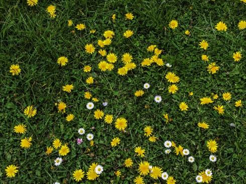 Chiêm ngưỡng vẻ đẹp hoa mùa xuân ở Bỉ - Ảnh 16.