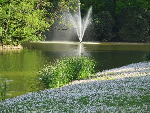 Chiêm ngưỡng vẻ đẹp hoa mùa xuân ở Bỉ - Ảnh 17.