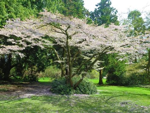 Chiêm ngưỡng vẻ đẹp hoa mùa xuân ở Bỉ - Ảnh 19.