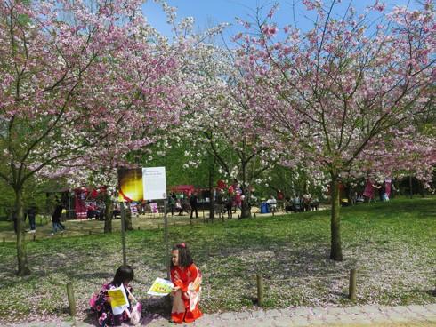 Chiêm ngưỡng vẻ đẹp hoa mùa xuân ở Bỉ - Ảnh 20.