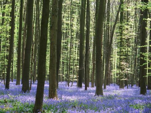 Chiêm ngưỡng vẻ đẹp hoa mùa xuân ở Bỉ - Ảnh 22.