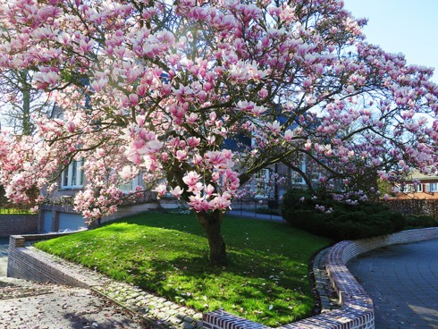 Chiêm ngưỡng vẻ đẹp hoa mùa xuân ở Bỉ - Ảnh 6.