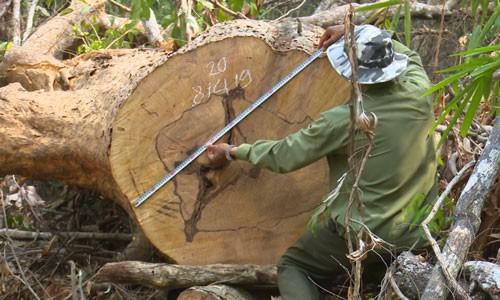 Hơn 28.500 tỉ đồng bảo vệ rừng Tây Nguyên - Ảnh 1.