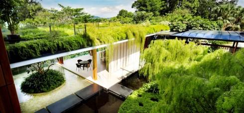 Ngôi nhà xanh mướt với vườn trên mái - Ảnh 8.