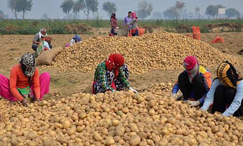 Pepsi kiện nông dân Ấn Độ vì trồng khoai có bản quyền - Ảnh 1.