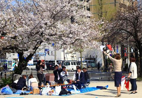 Hoa anh đào - ngành kinh doanh tỉ đô của Nhật Bản - Ảnh 3.