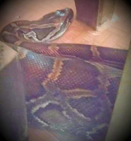 Giang reappears as a python giant in the temple - Photo 1.