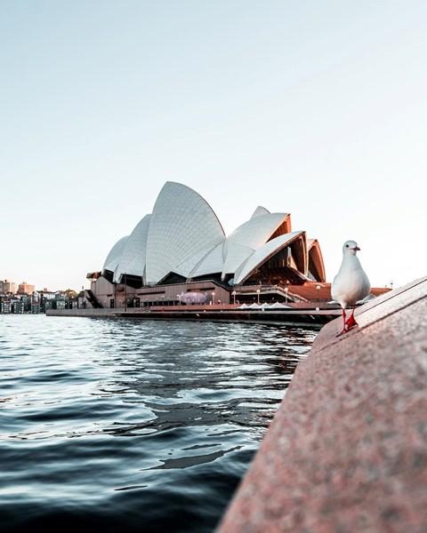 Tháng 8, đến Úc ngắm lễ hội hoa anh đào thần tiên đẹp kỳ ảo - Ảnh 1.