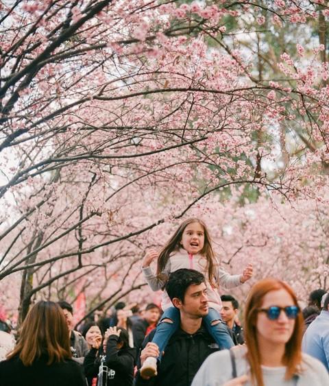 Tháng 8, đến Úc ngắm lễ hội hoa anh đào thần tiên đẹp kỳ ảo - Ảnh 14.
