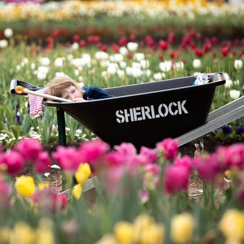 Tháng 8, đến Úc ngắm lễ hội hoa anh đào thần tiên đẹp kỳ ảo - Ảnh 15.