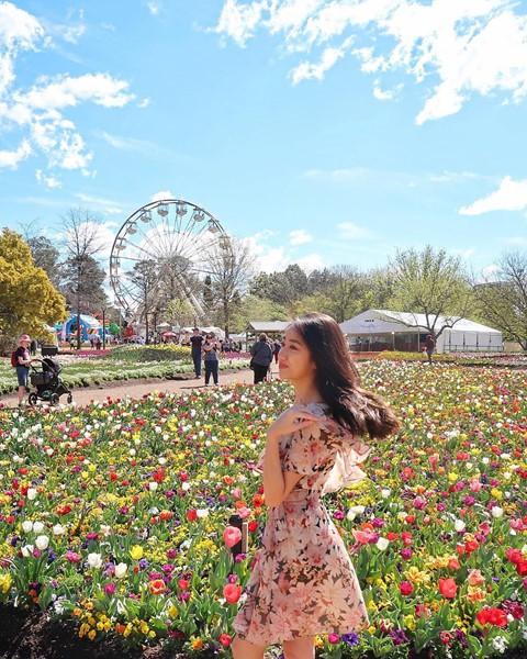 Tháng 8, đến Úc ngắm lễ hội hoa anh đào thần tiên đẹp kỳ ảo - Ảnh 16.