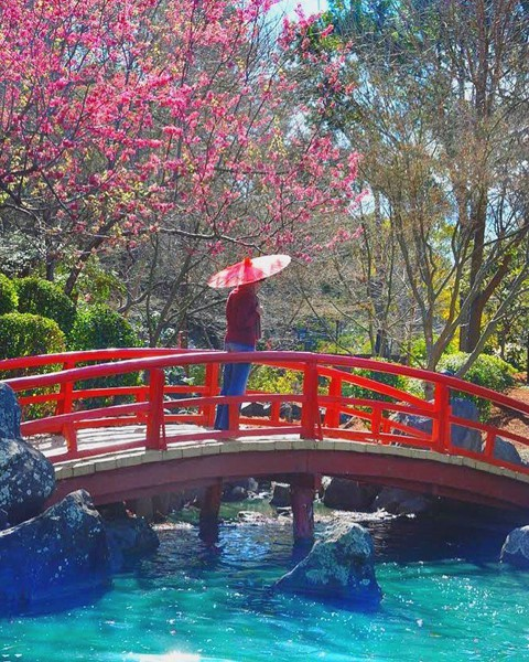 Tháng 8, đến Úc ngắm lễ hội hoa anh đào thần tiên đẹp kỳ ảo - Ảnh 4.