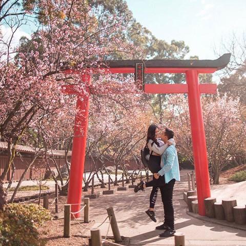 Tháng 8, đến Úc ngắm lễ hội hoa anh đào thần tiên đẹp kỳ ảo - Ảnh 6.