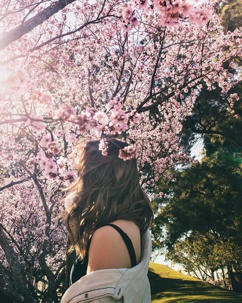 Tháng 8, đến Úc ngắm lễ hội hoa anh đào thần tiên đẹp kỳ ảo - Ảnh 8.