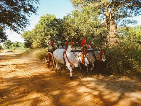 Tiếng vó ngựa len lỏi giữa những khu đền ở Myanmar - Ảnh 4.