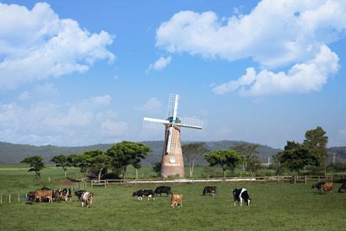 Đến năm 2020, Việt Nam có 405.000 con bò sữa - Ảnh 1.