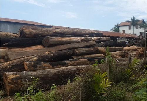 Nhiều kiểm lâm, bảo vệ rừng bảo kê trùm gỗ lậu Phượng râu - Ảnh 1.