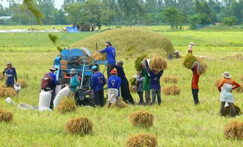 Nông dân được lợi nhiều nhờ liên kết