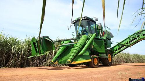 Liên kết sản xuất cánh đồng mía lớn - Ảnh 1.