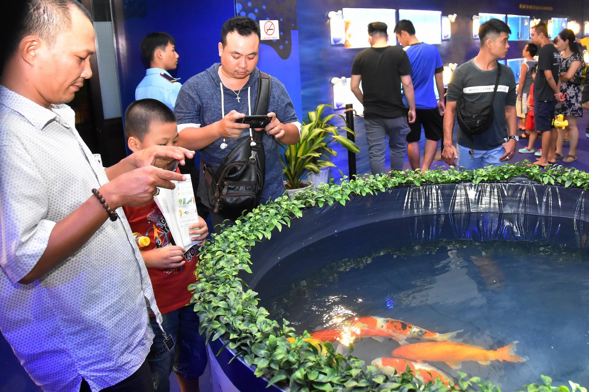 Cả trăm loài cá cảnh đủ sắc màu hút hồn dân chơi thủy sinh ở TP HCM - Ảnh 3.