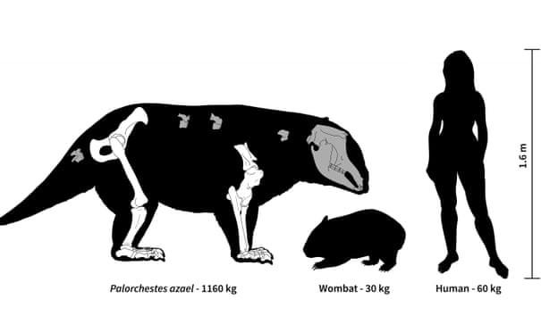 Lộ diện sinh vật lạ nặng 1 tấn, vuốt dao găm, mặt heo vòi - Ảnh 1.