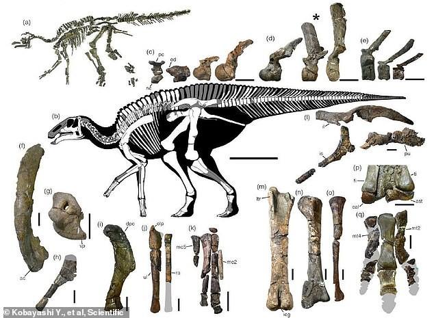 Vấp vật lạ, đào được quái vật khổng lồ thời châu Á liền với Mỹ - Ảnh 3.