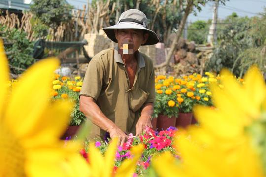 Nhiều chủng loại hoa mới, lạ ở Sa Đéc tấp nập lên phố - Ảnh 4.