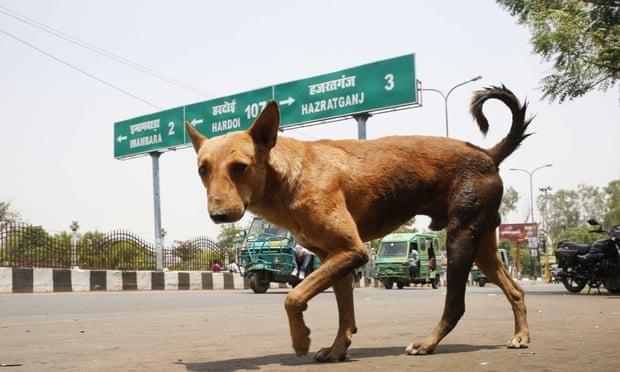 Bầy chó hoang lẻn vào bệnh viện cắn chết trẻ mới sinh được 3 giờ  - Ảnh 1.