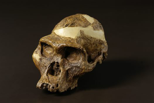 Bí ẩn loài người cổ mang hàm răng mãnh thú - Ảnh 1.