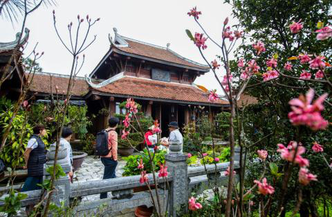 Chiêm ngưỡng hoa đào chuông độc đáo trên đỉnh Bà Nà - Ảnh 6.
