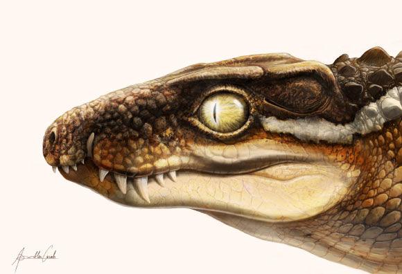 Sinh vật kinh dị 71 triệu tuổi khiến siêu khủng long phải khiếp sợ - Ảnh 1.