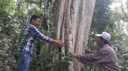 Giữ cánh rừng săng lẻ hiếm hoi - Ảnh 2.