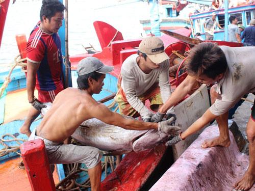 Siết chặt an toàn vệ sinh thực phẩm tàu cá - Ảnh 1.