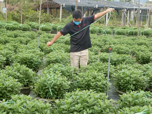 Người trồng hoa Tết âu lo - Ảnh 1.