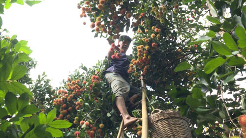 Mở thêm thị trường cho nông sản (*): Sức ép nâng chất lượng - Ảnh 1.