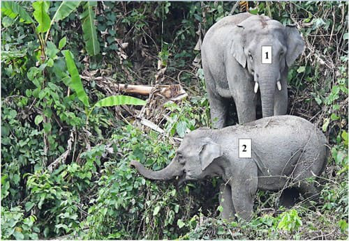 Lần đầu phát hiện đàn voi có cả voi con ở Quảng Nam - Ảnh 2.