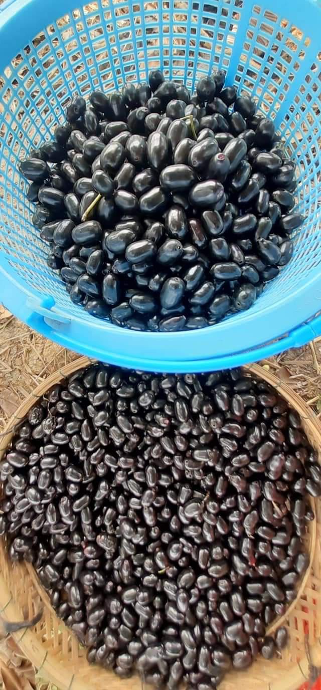 Về miền Tây thưởng thức trái rừng màu tím có vị ngọt xen lẫn chua, chát - Ảnh 7.