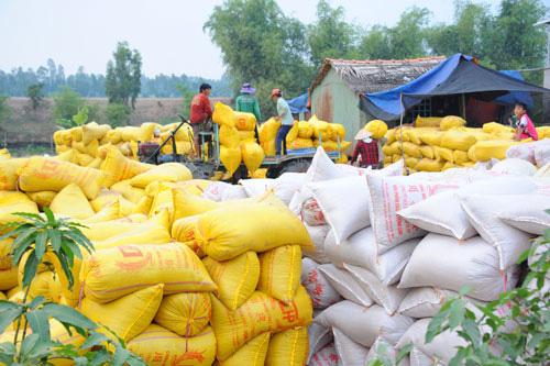 Cục An ninh Kinh tế tổng hợp, Bộ Công an tham gia đoàn kiểm tra về xuất khẩu gạo - Ảnh 1.