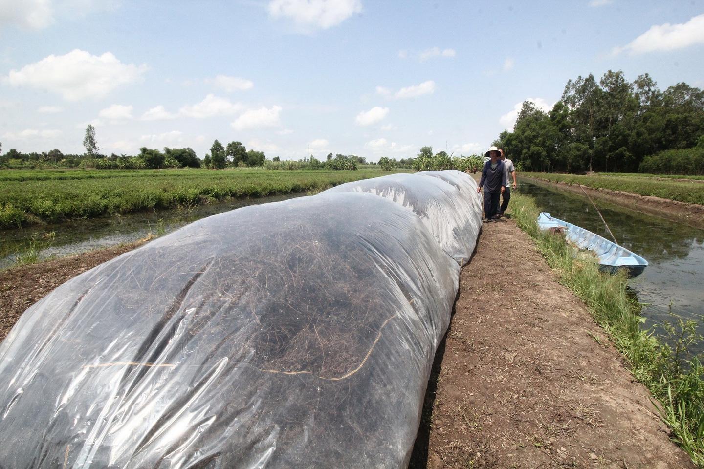 [eMagazine] Hiệu quả từ mô hình trồng sương sáo của bà con nông dân miền Tây - Ảnh 5.
