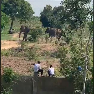 Voi nhà ở Đắk Lắk húc chết người: Nạn nhân đã chăm sóc voi 4 năm - Ảnh 1.